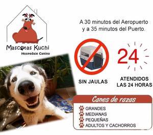 Hospedaje Canino Mascotas Kuchi