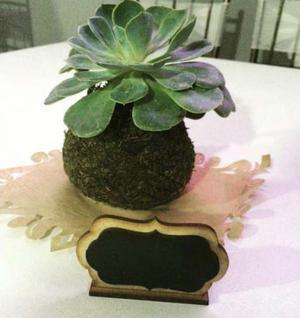 Plantas ornamentales helechos posot class for Plantas ornamentales helechos
