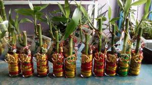Lucky Bambú Chino De 10cm Decorado Al Estilo Feng Shui