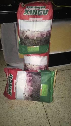 Semillas Certificadas De Pasto