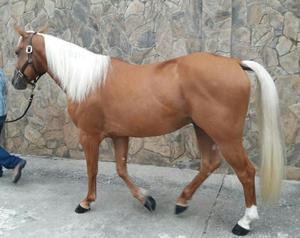 Ventas de Potros, Yeguas,caballos J.m