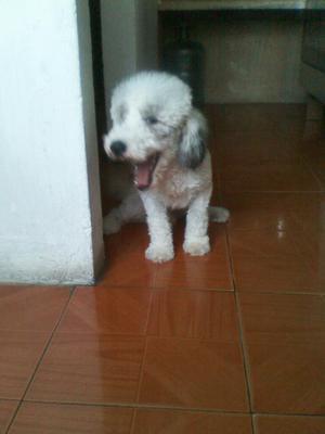 Doy en Adopcion a Mi Perro Max
