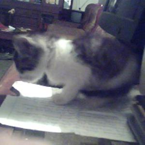 Buscando Este Gatito