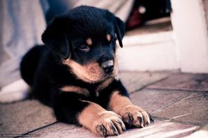 Busco Cachorro Para Adoptar