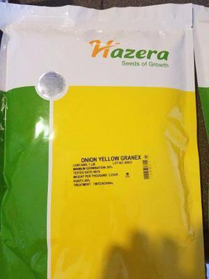 Semillas De Cebolla Yellow Granex De Hazera