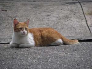 Hermoso Trio De Gatos En Adopcion Operados