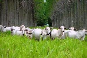 Proyectos Forestales Agrosilvopastoriles Fincas Agro Ganado