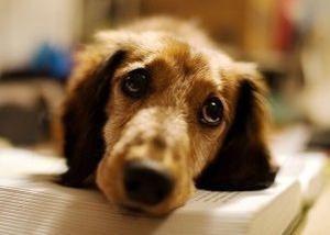 Libro De Mascotas: Perros