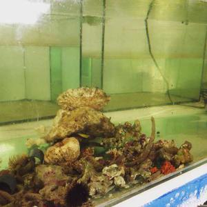 Venta De Agua Salada Para Acuarios Marinos (Sal Marina)