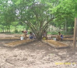 semillas forestales colombia - suministro y asesoria