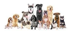 Cachorros de Diferentes Razas
