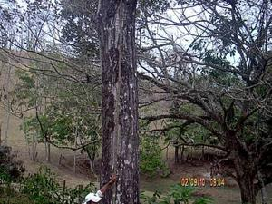 cubicacion y valoraciones forestales maderables