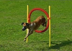 Kit De Salto Para Entrenamiento Perro Mascota Canino Agility