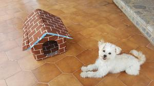Cama Casa De Cojín Para Perro O Gato Pequeño Tela