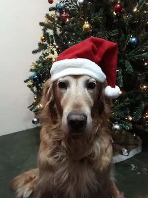 Gorro De Navidad Para Perros Grandes Y Pequeños
