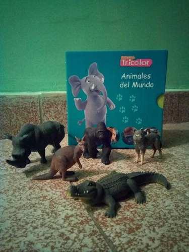 Colección De Libros Animales Del Mundo