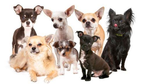 Hospedaje Canino Excelente Atención 24 Horas