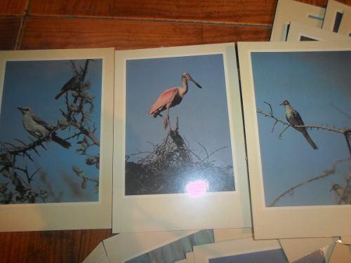 Imágenes Fotos Postales De Aves De Venezuela