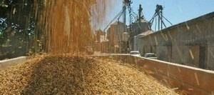 Venta De Granos Y Materia Prima Para Alimento Animal