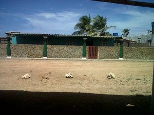 Alquilo casa en playa el supi paraguana edo falcon
