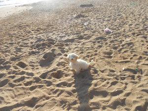 Se busca poodle miny toys