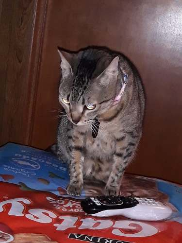 Juguete Gatsy Saco Para Gatos
