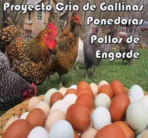 Kit Aprende Cría De Gallinas Ponedoras Y Pollos De Engorde.