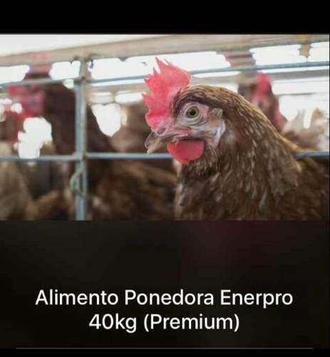 Alimento Gallinas Ponedoras Y Engorde