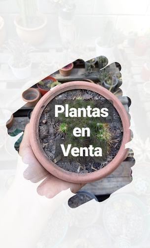 Arreglos De Cactus Y Suculentas, Piedras Decorativas