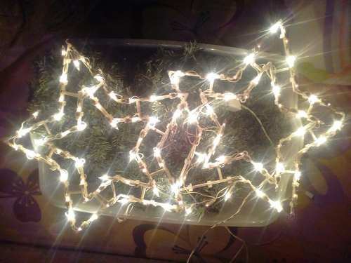 Luces De Navidad En Forma De Estrellas