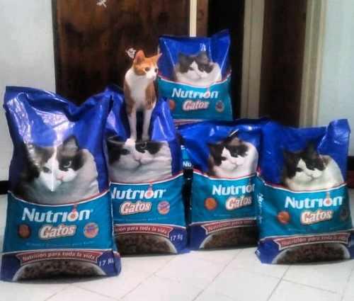 Gatarina Nutrion De 8 Y 17 Kilos