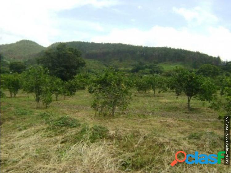 Parcelas de Terrenos Sector Orujito - Nirgua