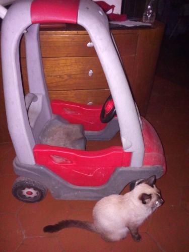 Carro Montable Para Niños Cutie Babies