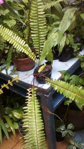 Planta De Helecho Natural