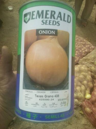 Semillas De Cebolla Esmeralda 438