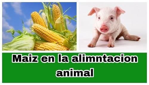 Harina De Maiz Consumo Animal Con Grasa Buen Precio