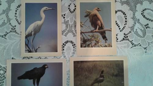 Colección De Postales Aves De Venezuela