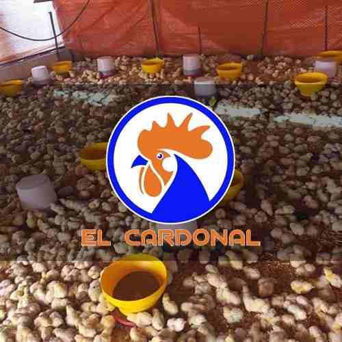Venta De Alimento Pollo Iniciador, Engorde, Ponedoras, Cerdo