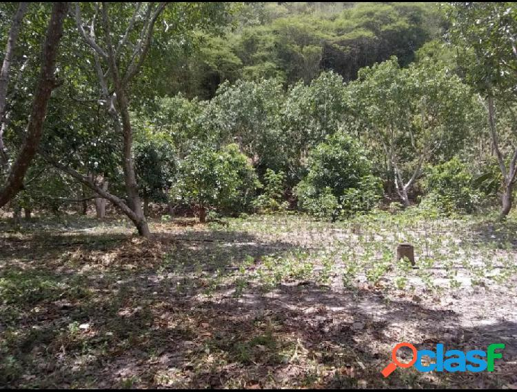 RAH: 20-3358. Terreno en venta en Municipio Crespo
