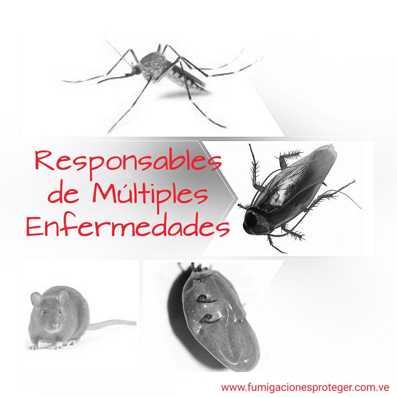 Expertos en el Control de Insectos