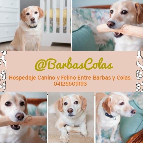 Libro De Hospedaje Canino Y Felino Y Otros