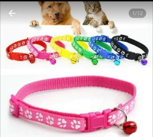 Collar Para Perros Y Gatos