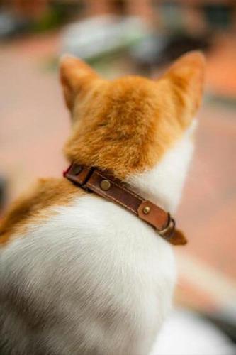 Collares Para Gato Personalizados En Cuero, Hecho A Mano