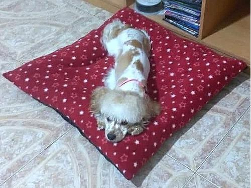 Camas Para Perros Mascotas 50x50 Fabricamos A La Medida