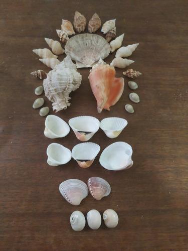 Set De Decoracion De Caracoles Y Conchas Marinas