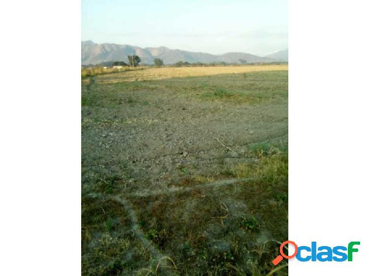 Terreno en Guacara sector sisal