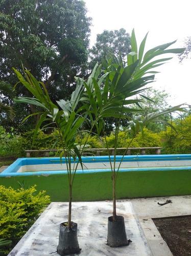 Plantas De Palma