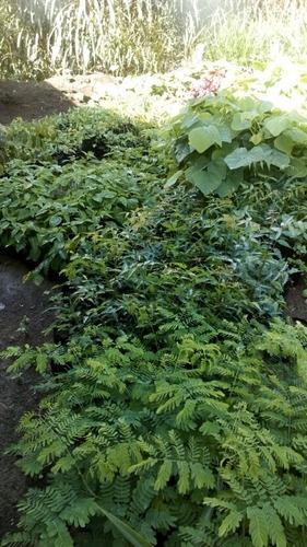 Plantas Forestales Y Ornamentales Y Otras