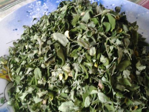 Moringa (moringa Oleifera) Semillas