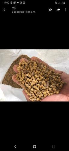 Alimento Gallinas Ponedora Plus Purina